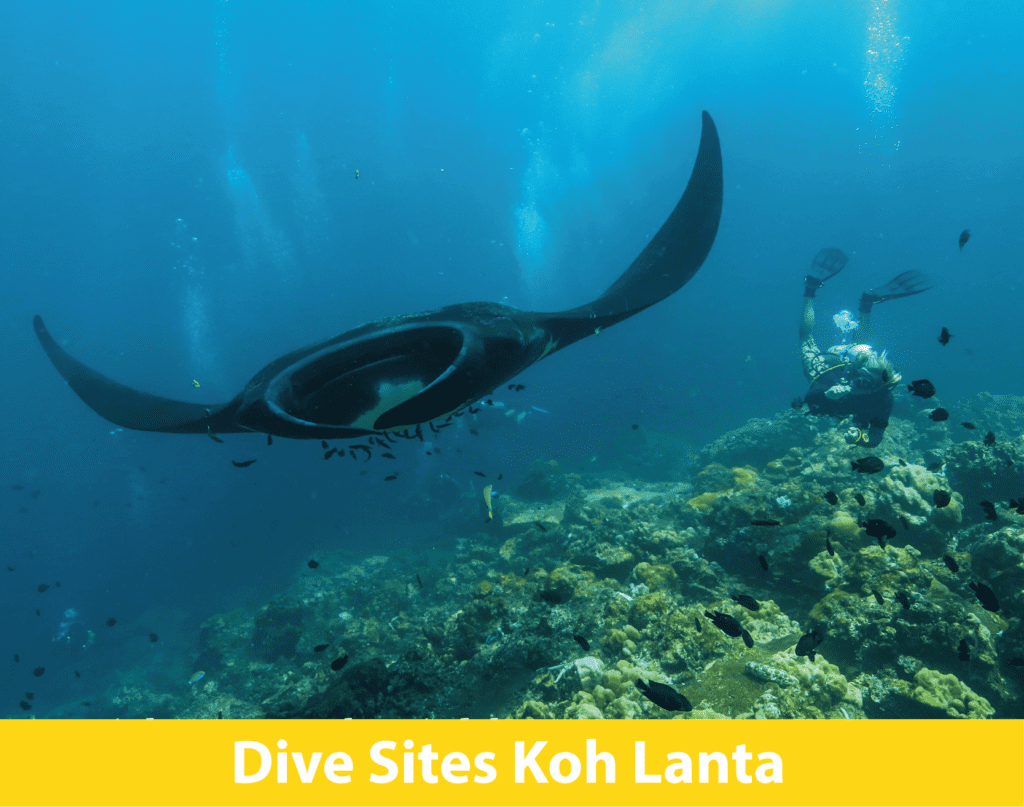 SCUBA diving Thailand, best dive sites, Koh Lanta, manta, whale shark