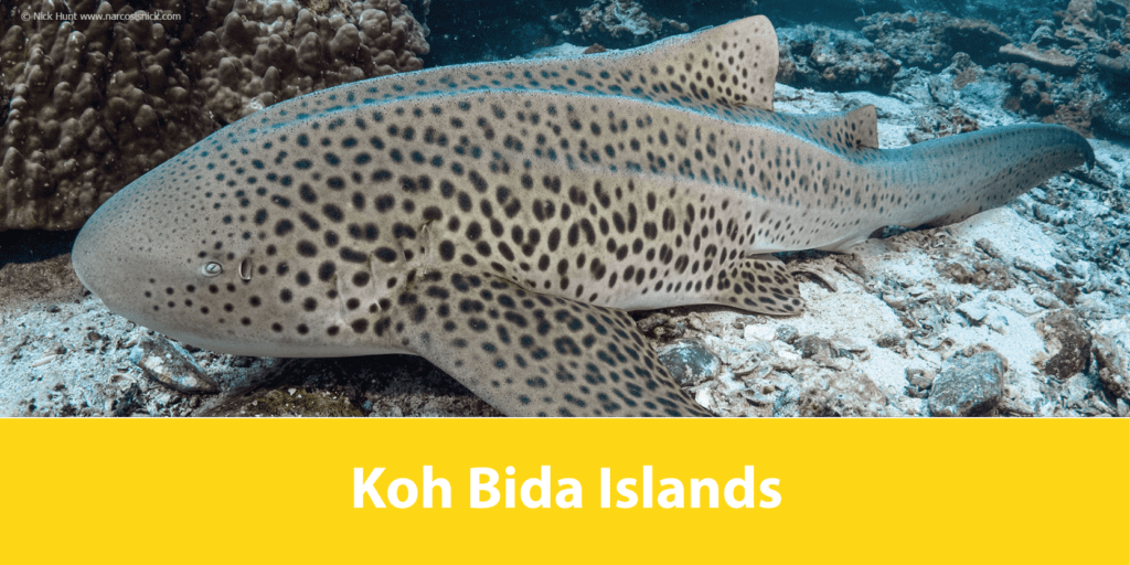 Koh Bida Islands Lanta Diver
